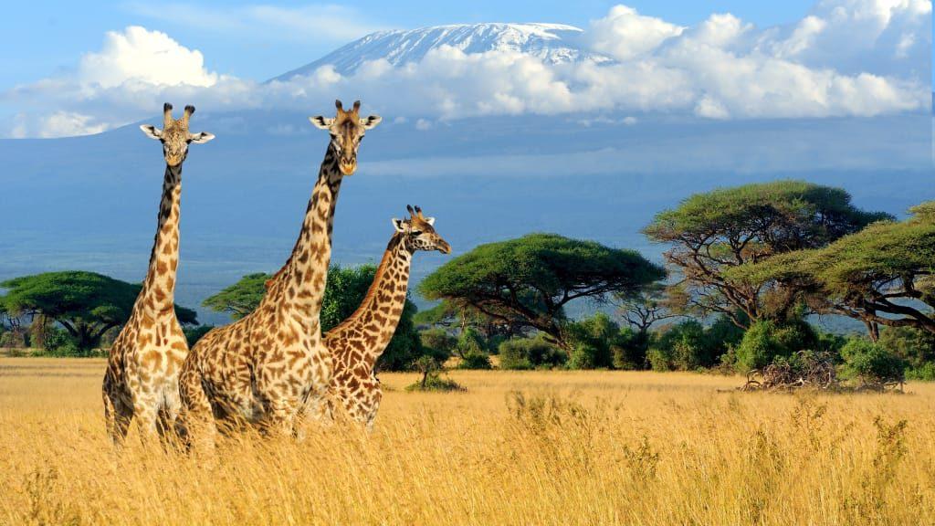 Quels sont les lieux que vous devez absolument voir au Kenya ?